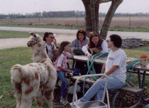 llama at picnic table with children